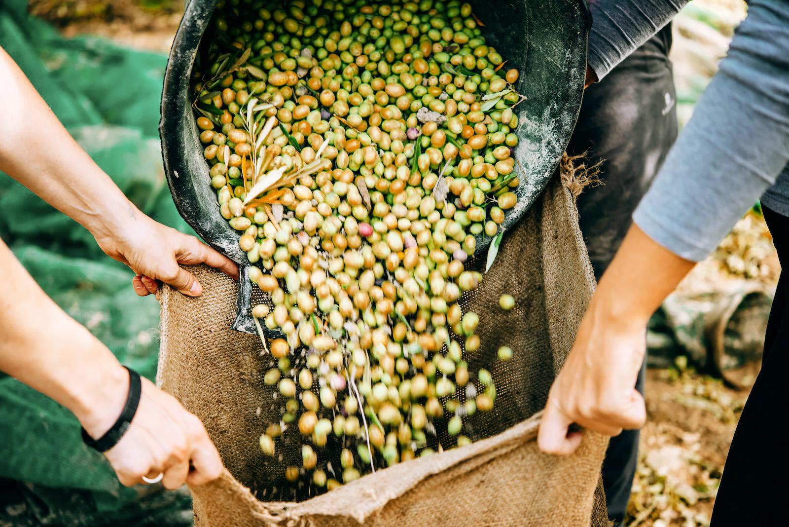 Гастротуризм в Европе: путешествия к еде Гастротуризм в Европе: путешествия к еде olive farm