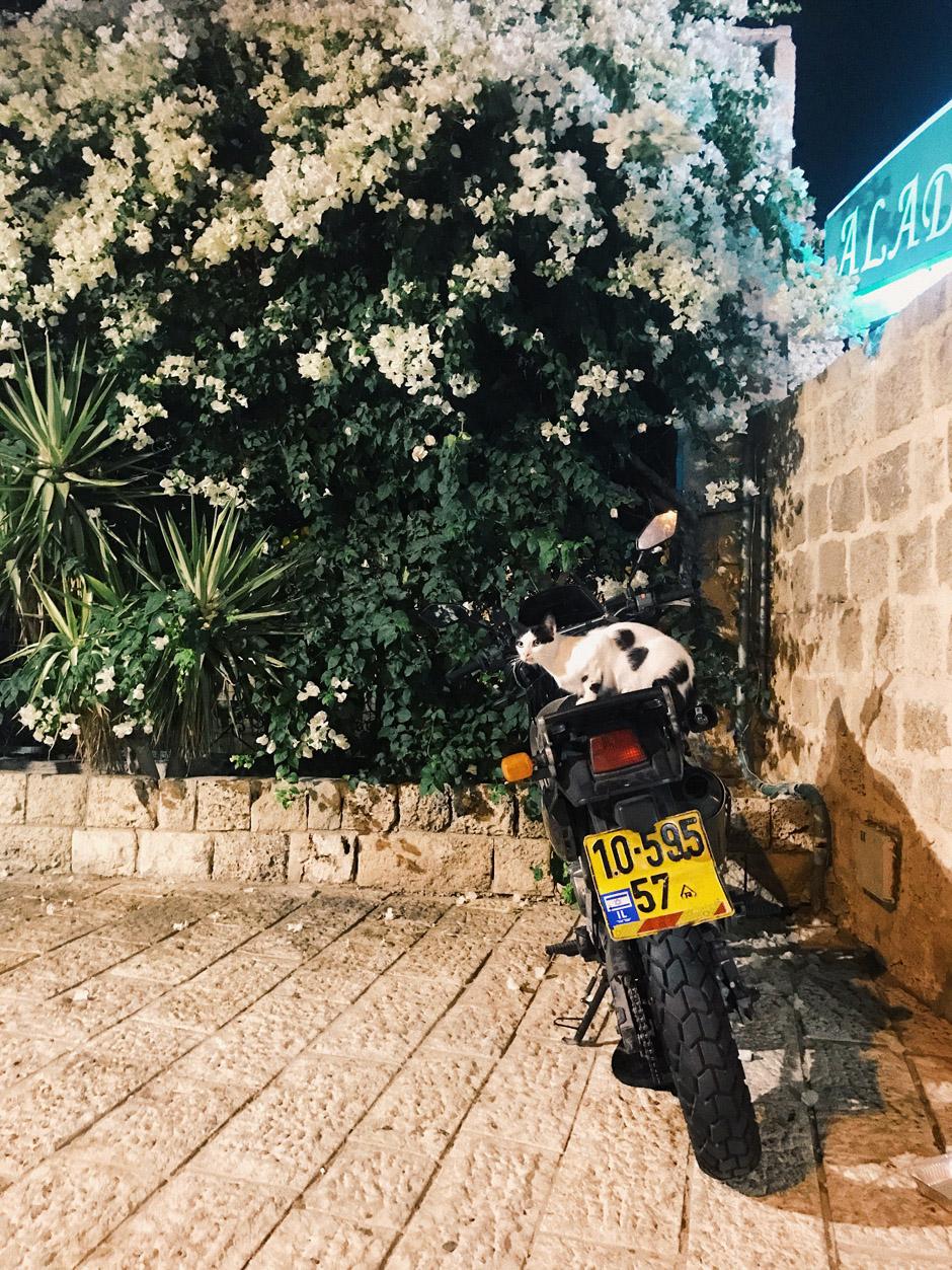 отдых  Израилю 16 лайфхаков для путешествия по Израилю BB0E5187 91CD 4E18 96D2 CB1DF51D88C9