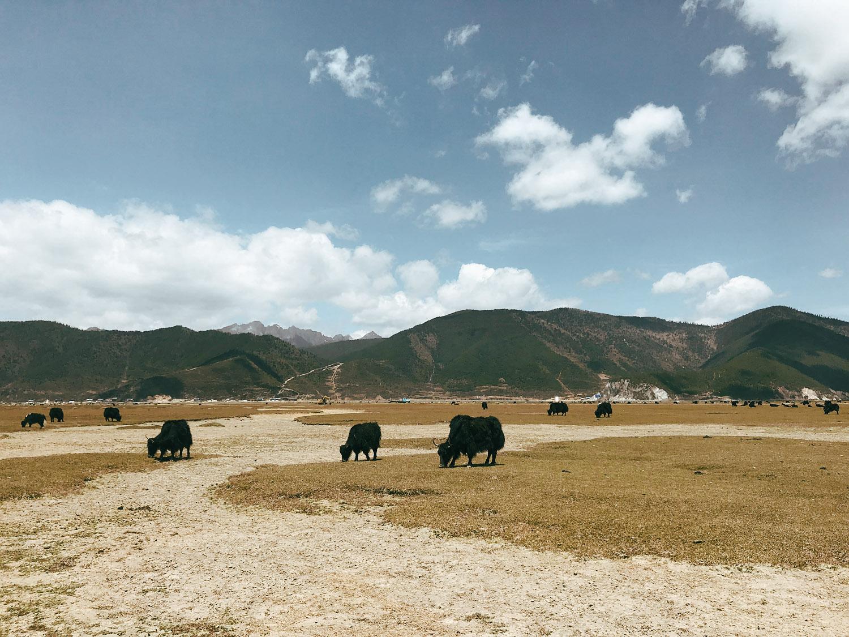 юг Китая Едем на юг Китая: Ущелье Прыгающего Тигра shangri 20la4