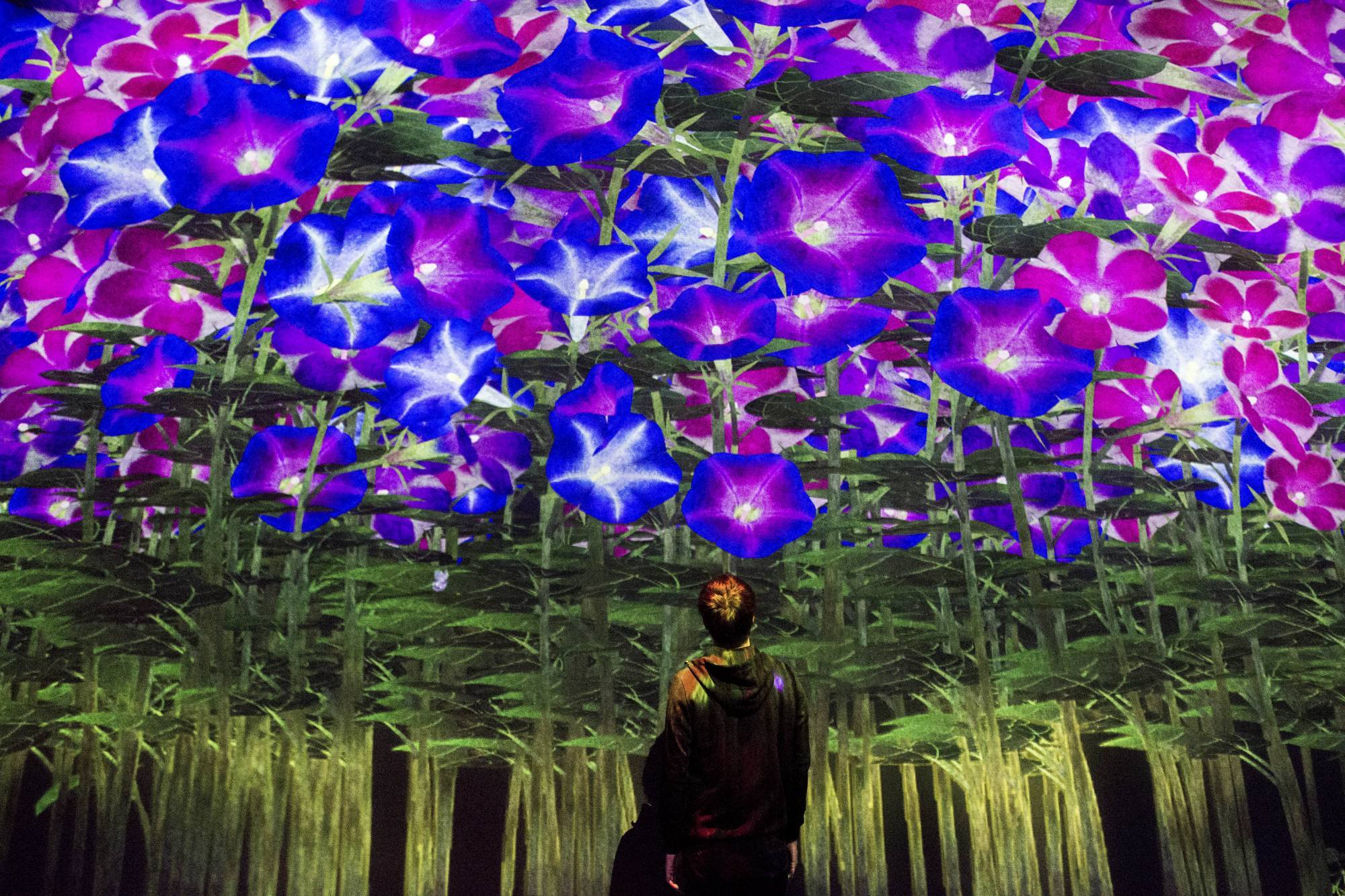 Токио Другая реальность: первый в мире Музей цифровых искусств в Токио 14911