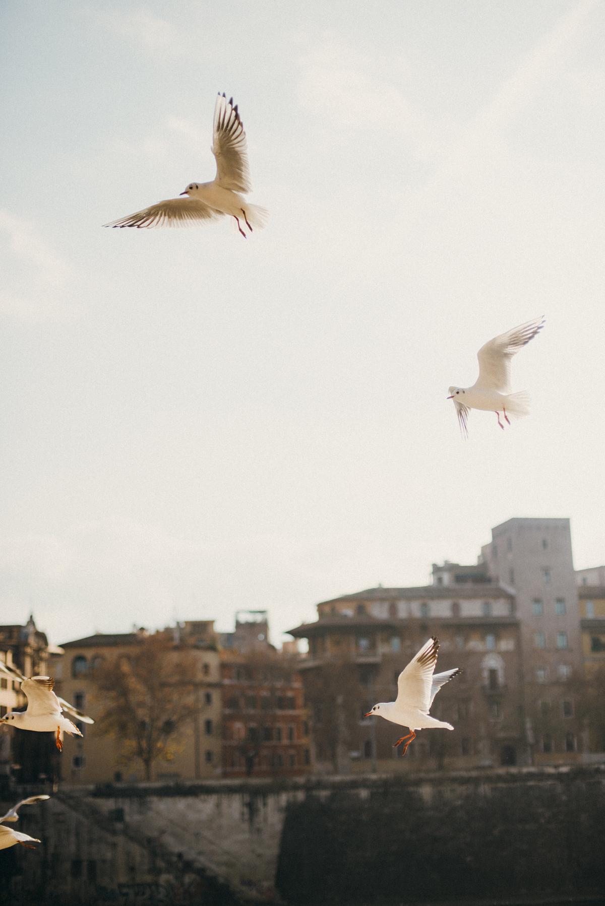 Культурные столицы Италии Культурные столицы Италии ines perkovic a simple hello rome birds sea gulls