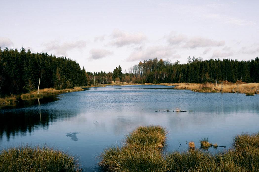Место дня: новый национальный парк в Дании Место дня: новый национальный парк в Дании 5004050 nationalpark vil tiltrkke turister