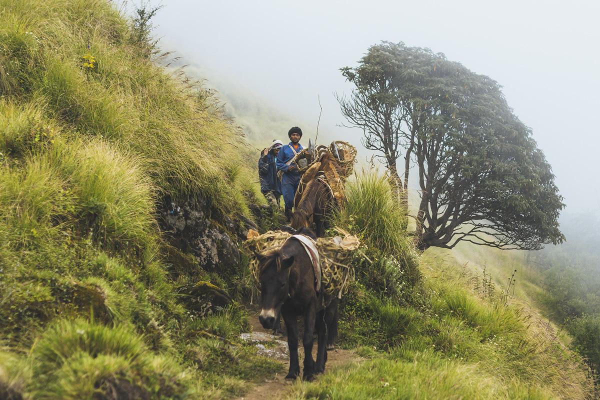 Опыты: месяц в Гималаях Опыты: месяц в Гималаях  MG 3595