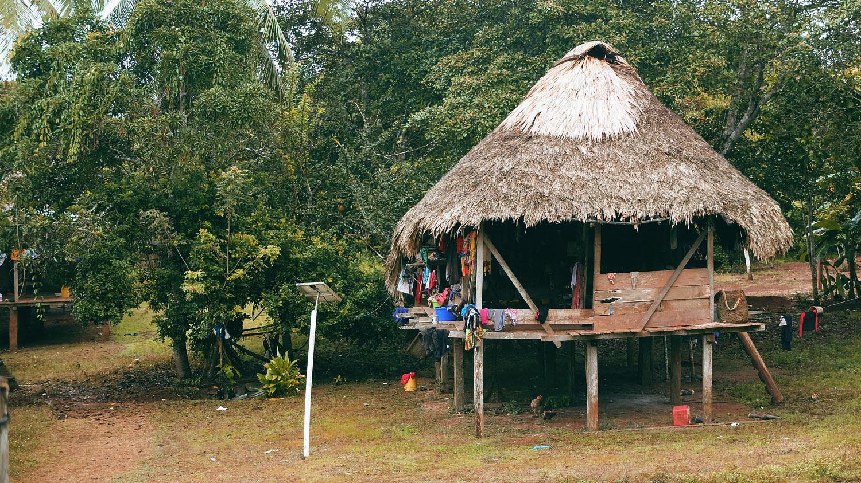 «Хочу домой» из джунглей Панамы «Хочу домой» из джунглей Панамы DSCF5622