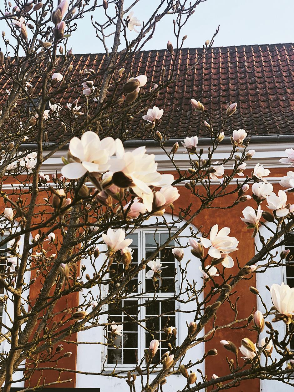 Личный опыт: Как устроена учеба в бизнес-школе Копенгагена Личный опыт: Как устроена учеба в бизнес-школе Копенгагена 7