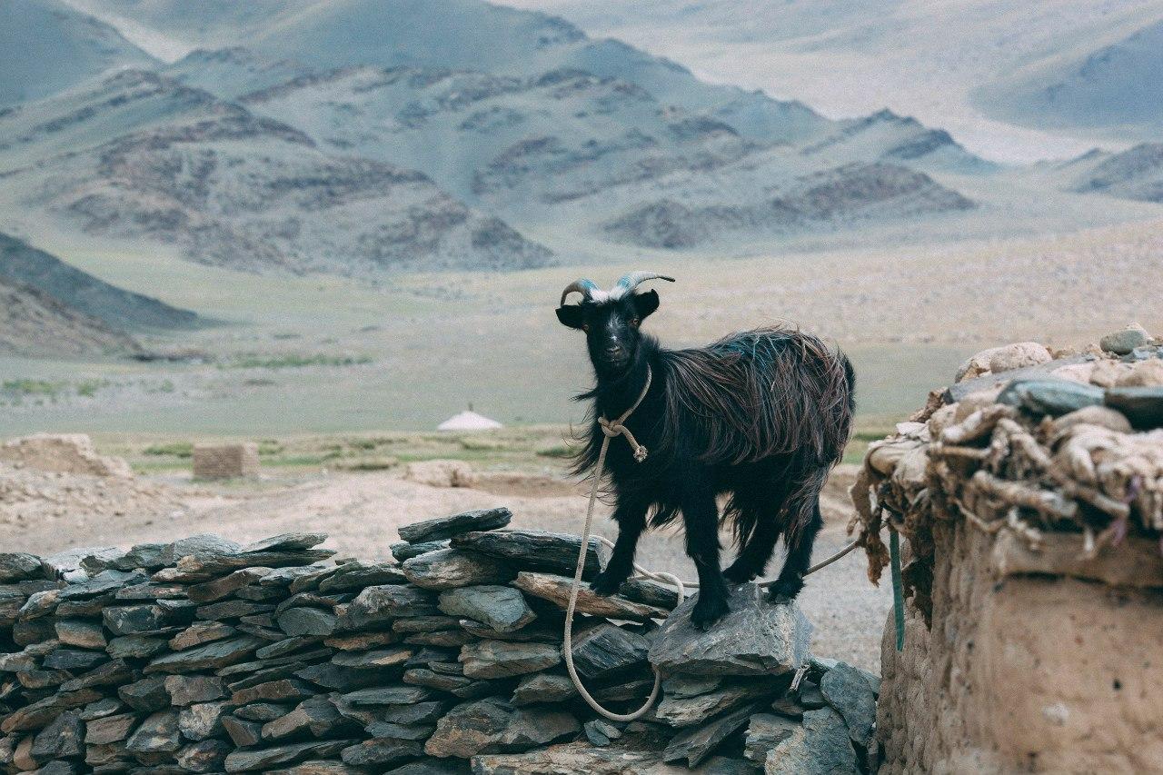 Едем в Монголию Едем в Монголию  TttkXtaVJY