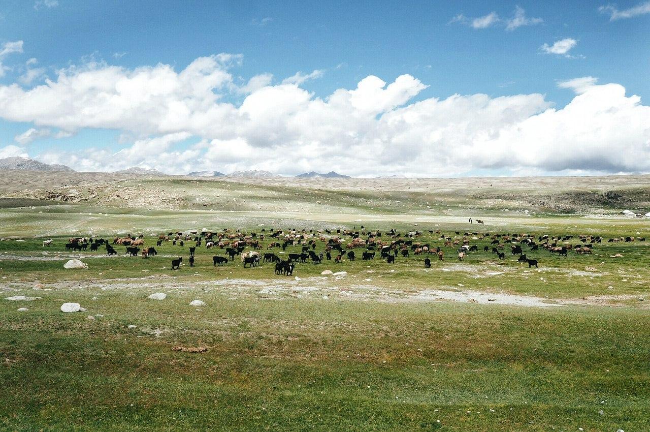 Едем в Монголию Едем в Монголию DpoJipCo5Fs