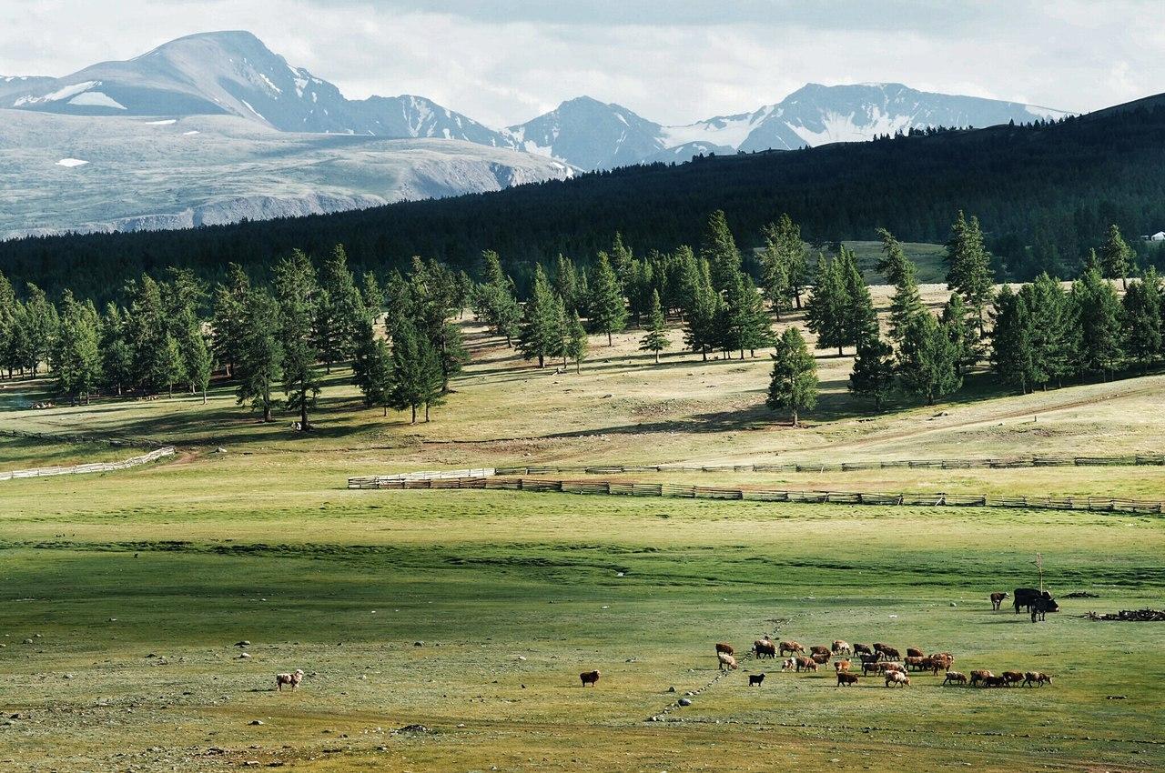 Едем в Монголию Едем в Монголию cDGeBjXDqBg