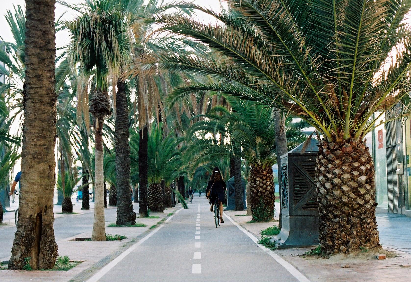 Барселона Барселона во всей красе CNV000016 20 3