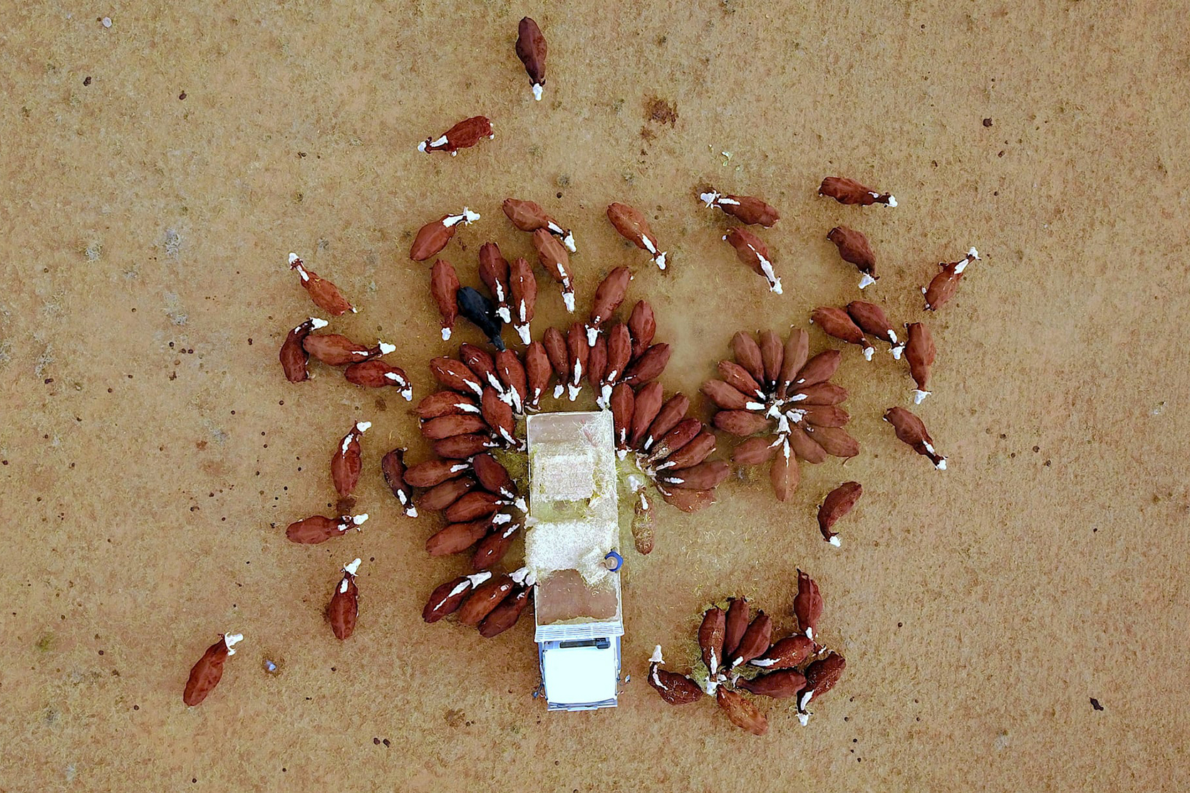 Фото дня: засуха в Австралии с высоты птичьего полета Фото дня: засуха в Австралии с высоты птичьего полета 1