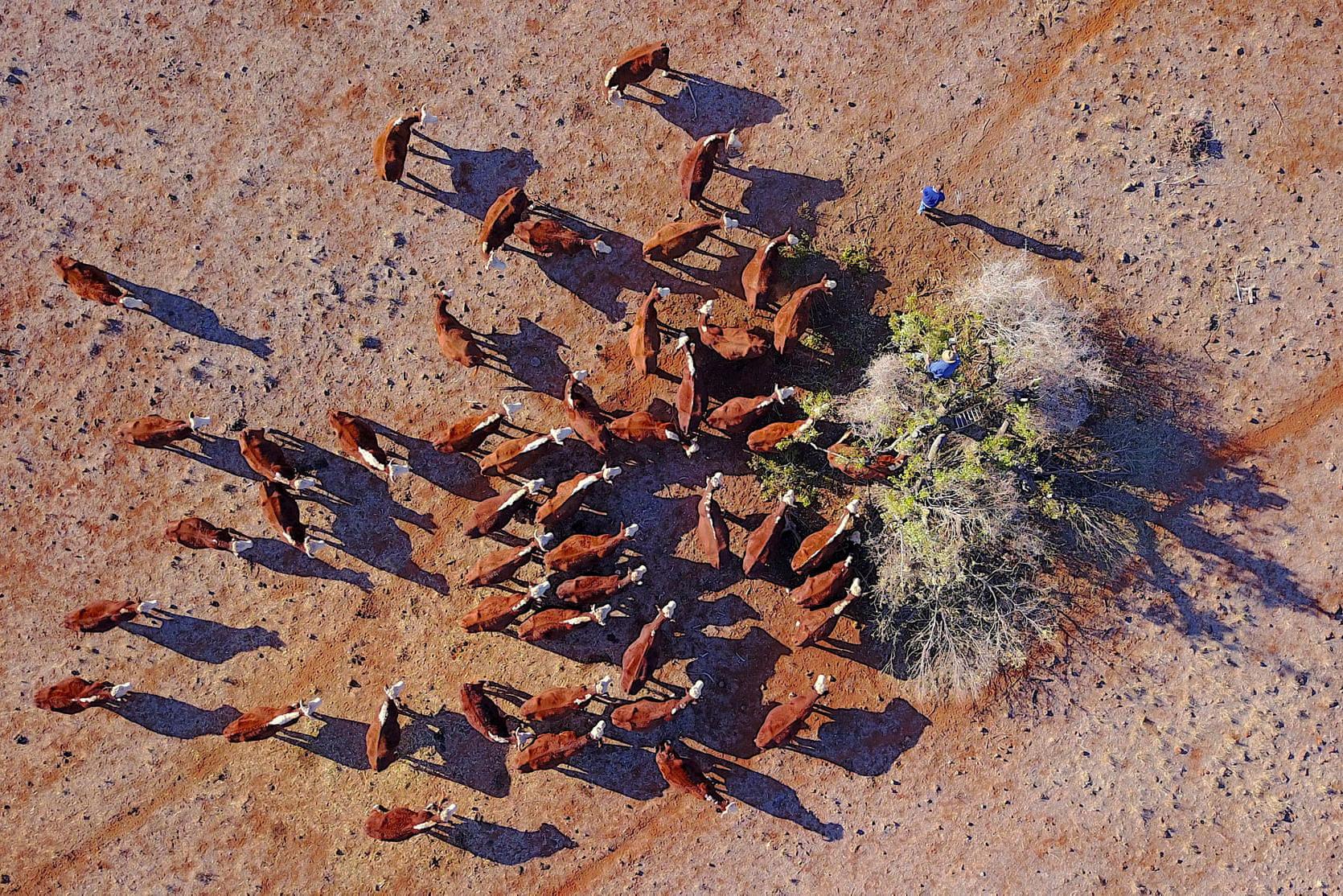 Фото дня: засуха в Австралии с высоты птичьего полета Фото дня: засуха в Австралии с высоты птичьего полета 2