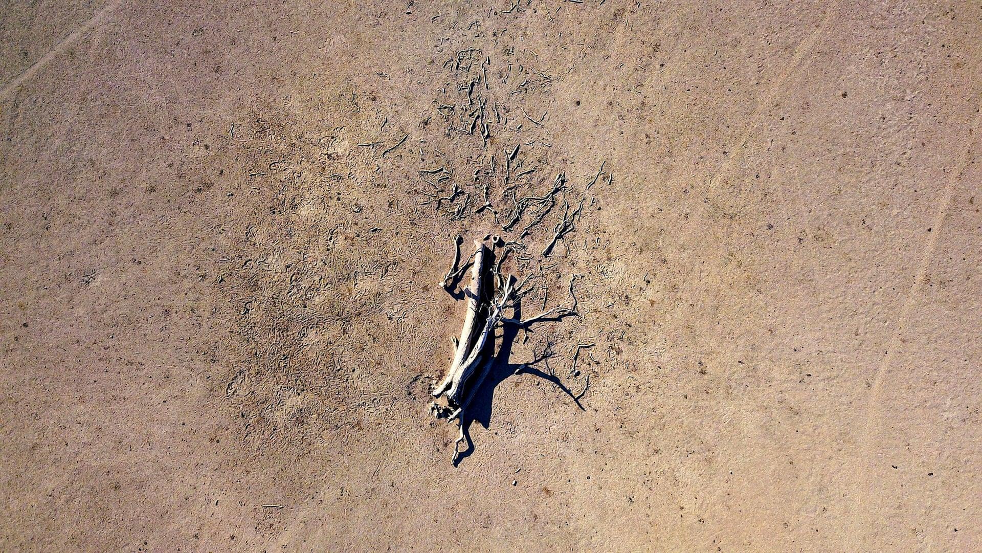 Фото дня: засуха в Австралии с высоты птичьего полета Фото дня: засуха в Австралии с высоты птичьего полета 3500 20 4