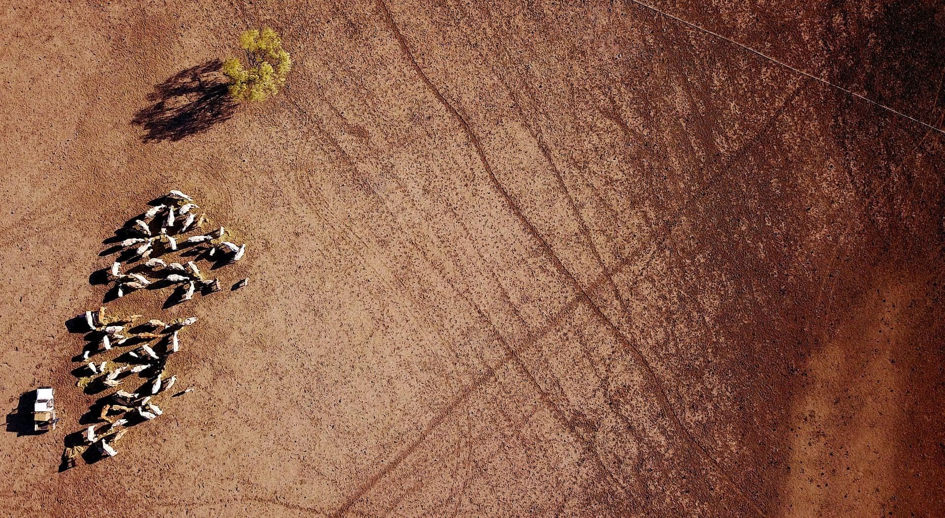 Фото дня: засуха в Австралии с высоты птичьего полета Фото дня: засуха в Австралии с высоты птичьего полета 3500 20 7